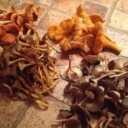 La cueillette des champignons sauvages